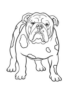 Printable bulldog coloring page. Free PDF download at http://coloringcafe.com/coloring-pages/bulldog/