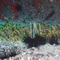 Teneriffa / Tauchen im Salzwasser / Fotos   Nies.ch Diving, Plants, Photos, Canarian Islands, Tenerife, Sevilla Spain, Scuba Diving, Planters