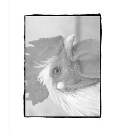 Color Over The Gray To Bring Your Images Life With Huelishs High Quality Grayscale Coloring Books Beautiful Nature And Creatures