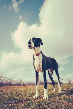 You can propose to me with a Tiffany's original and a great dane by your side in order for me to say yes.