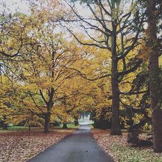 Foliage dautunno a @kewgardens  #MContheroad #kewgardens #magic #foliage #london via MARIE CLAIRE ITALIA MAGAZINE OFFICIAL INSTAGRAM - Celebrity  Fashion  Haute Couture  Advertising  Culture  Beauty  Editorial Photography  Magazine Covers  Supermodels  Runway Models