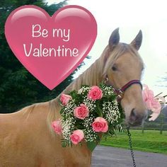 valentine's day horse box