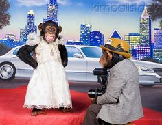 Celebrity Chimpanzee Standing On Red Carpet In White Dress Being Photographed By Press Chimp