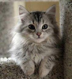 本日の美人猫vol.34 « 猫ジャーナル