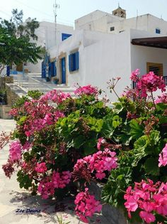 Nice house with flowers in Lipsi island, Dodecanese, Greece Crete Greece, Greek, Nice, Places, Islands, Flowers, Landscapes, Colors, House