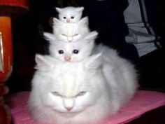 A white stack of kitties with a peanut on top!