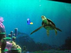 Not to be missed inside The Living Seas is Turtle Talk With Crush!  This is really a fun experience, and one of the bigger reasons you will agree that Epcot for Kids reigns in this pavilion.