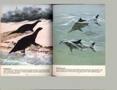 Maurice Wilson, FOSSIL ANIMALS, Daily Mail Boys' Annual c1958