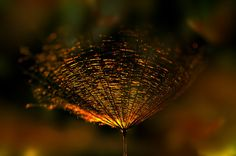 """odditiesoflife: """" Finding Gold in Nature Beautiful macro photos by Emerald Wake with some post-production techniques involved. """" I hide tragedy in every image."""