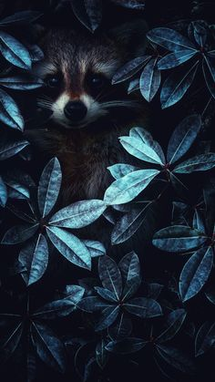 En el mundo animal nos inspira! Tier Wallpaper, Animal Wallpaper, Nature Wallpaper, Black Wallpaper, Animals And Pets, Baby Animals, Cute Animals, Beautiful Creatures, Animals Beautiful