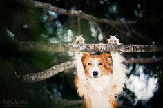 playful dog photos ksenia raykova 7