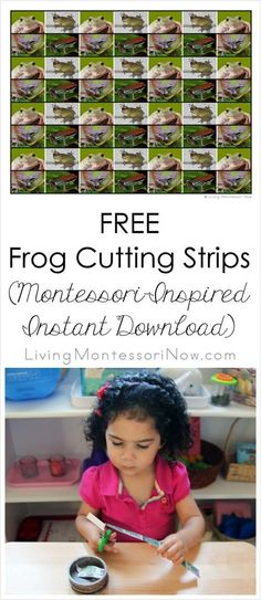 These FREE frog cutting strips use Montessori principles for a fun, themed way to improve preschoolers' scissor cutting skills at home or in the classroom. Frog Activities, Cutting Activities, Hands On Activities, Learning Activities, Kids Learning, Early Learning, Teaching Ideas, Montessori Education, Montessori Materials