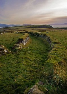spectacular field with sheep, Ireland