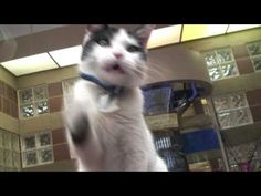 'Cats Doing Cat Stuff For Adoption' Will Make You Want To Adopt A Cat