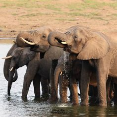 Family Means Everything Kruger National Park, National Parks, Family Meaning, Elephant, Africa, Adventure, Animals, Instagram, Animales