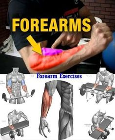 6 Of The Best Forearm Exercises For Muscle Growth And Strength For Proportional Arms, 6 Of The Best Forearm Exercises For Muscle Growth And Strength For Verhältnisgleich Arms For really big arms, stop listening to the bro science and t. Weight Training Workouts, Gym Workout Tips, Biceps Workout, Fitness Workouts, Workout Fitness, Forarm Workout, Girl Workout, Best Forearm Exercises, Belly Exercises