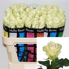 A-1 are an ivory / white rose. A-1 are a 'poor mans' Avalanche Rose to be honest & nowhere near the same quality. 50cm stem lengths this wholesale flower cut flower is wholesaled in 20 stem wraps