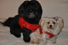 Lola Canine Couture at Pawvogue.com