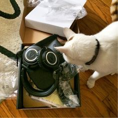 Fan Photo Friday: Silly cat, the M50x Headphones aren't for you!  Special thanks to Instagram user Valida for sharing!