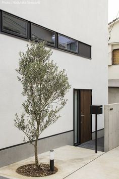 人気のシンボルツリーを調べてみました! - Yahoo!不動産おうちマガジン House Landscape, Japanese House, Windows And Doors, Trees To Plant, Garden Inspiration, Home Interior Design, Entrance, Architecture Design, Exterior