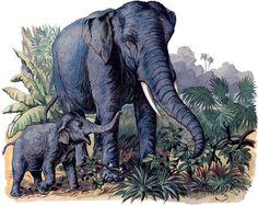 Vintage Elephants Image! - 1880's German Natural History Print - The Graphics Fairy