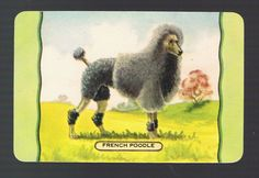 Playing Swap Cards 1 Single  1950 s   COLES  DOG  NAMED