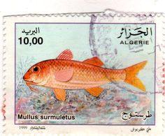 :: Webnode Stampinterrnational-FR7