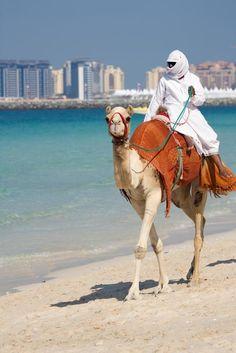 Photo about Camel walking along Jumeirah Beach in Dubai, UAE. Image of arabic, animal, camels - 12496657 Abu Dhabi, Dubai City, Dubai Uae, Sharjah, Timor Oriental, Camelus, Ras Al Khaimah, Dubai Travel, Dubai Tourism