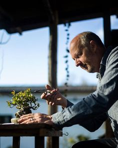 Morten Albek. www.shohin-europe.com  #盆景 #盆栽 #분재 #bonsai #shohin #shohinbonsai #japanese #art #tree #nature #life #feel #albek #mortenalbek  #tokonoma #toko #床 #床の間 #shohineurope