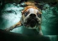 L'acqua è l'aria di chi non ha le ali...