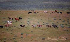 """<3....Horses/Ponies - """"breath taking moment""""...photo taken over a hundred feet high on a side of a rim rock, wild horses of all colors and color patterns passing by below..."""