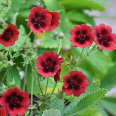 Garden Plants, Velvet, Amazing, Flowers, Gardening, Villa, Pink, Compost, Lawn And Garden