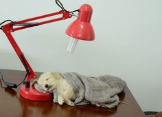 Celebrate Take Your Dog To Work Day – Animal Career Expert