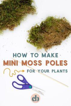 Moss Plant, Plant Crafts, House Plant Care, Tree Care, Different Plants, Live Plants, Plant Decor, Garden Projects, Houseplants