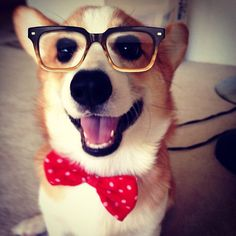 Stanley Corgi   ...........click here to find out more     http://guy.googydog.com