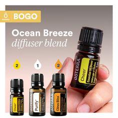 Doterra Diffuser, Essential Oil Diffuser Blends, Doterra Essential Oils, Best Essential Oils, Essential Oil Uses, Eos Products, Esential Oils, Diffuser Recipes, Herbs