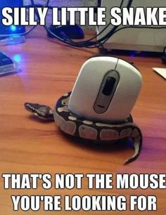 Hey silly snake that's not the Mouse your looking for