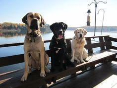 My amazing pups xo