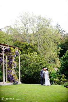 I do hope the wisteria at Vaucluse House will stay out like this for us!