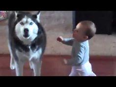Increible vídeo - Un Perro Lobo Hablando con un Bebe!