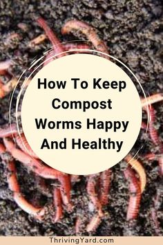 How can you tell if your compost worms are happy and healthy? What signs indicate healthy worms? Are you feeding your compost worms the right foods? What is the ideal diet for compost worms? Which food scraps should you avoid? Learn more about vermicomposting and follow these 5 steps to keep compost worms happy. #composting #compostworms #compostingforbeginners #whattocompost #whattofeedcompostworms #vermicomposting Healthy Fruits And Vegetables, Different Vegetables, Garden Care, Garden Tips, Worm Farm Diy, Making A Compost Bin, Composting 101, Homestead Gardens, Soil Improvement