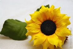sunflower how to