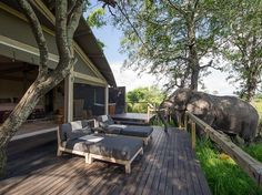 Abu Camp, Botswana. Highest concentration of elephants anywhere in the world.