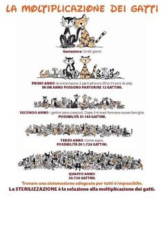 La moltiplicazione dei #gatti: perché dire sì alla #sterilizzazione