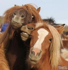 Reminds me of drunken girls trying to pose for a picture…