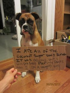 Boxer Dogs My girl just ate an entire bottle of lotion.and her poop looked like vanilla soft-serve ice cream! Boxer Dogs Facts, Dog Facts, Boxer Puppies, Boxer Memes, Boxer And Baby, Boxer Love, I Love Dogs, Cute Dogs, Cat Shaming