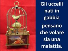 Translation: Birds born in captivity, think flying is an illness.