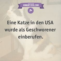 Deshalb geschah das: http://www.unnuetzes.com/wissen/9859/katzengeschworene/