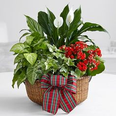 Search for merry and bright holiday dish garden centerpiece Christmas Flower Arrangements, Flower Arrangements Simple, Flower Vases, Flower Pots, Indoor Water Garden, Indoor Plants, House Plants Decor, Plant Decor, Christmas Planters