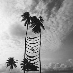 Hammocks in Palm trees